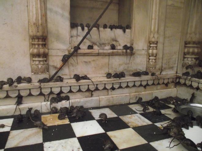 Karni Mata - a patkányok temploma