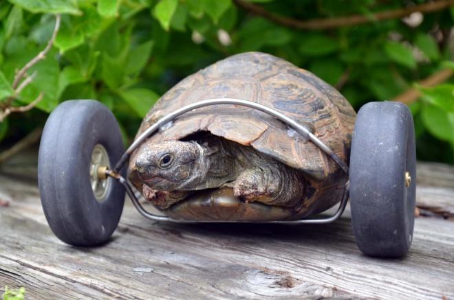 Teknős két keréken