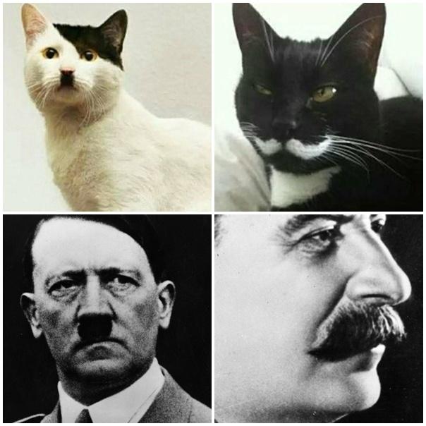 Érdekes hasonlóság