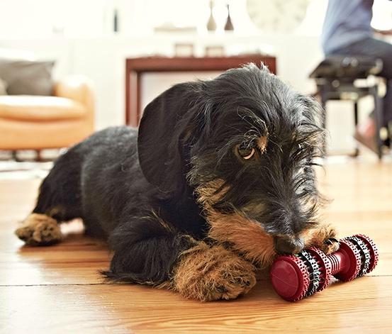 Kutyák gyomrából előkerült legbizarabb tárgyak