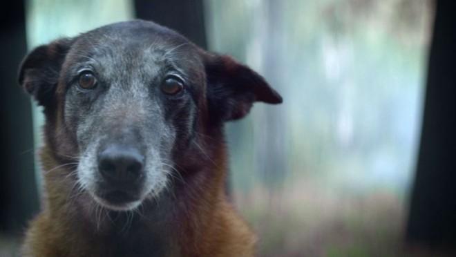 Kampány a kutyák hűségéért! Állatbarátoknak kötelező!