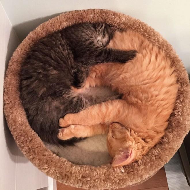 Mai napig elválaszthatatlan a két menhelyi cica