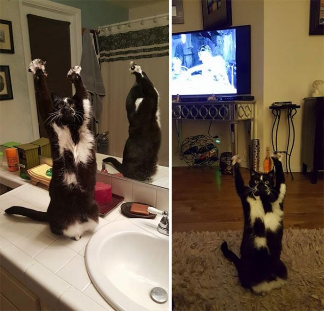 Az internet új kedvence a nyújtózkodó cica