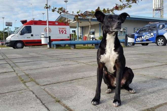 A hűséges kutyus 8 hónapja várja gazdáját a kórház előtt