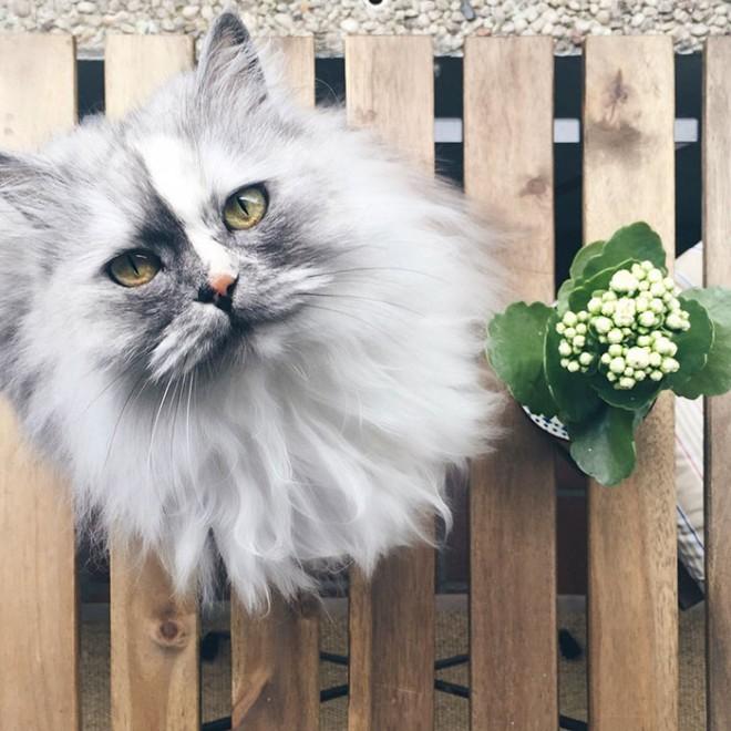 A márvány bundájú cica az internet új kedvence