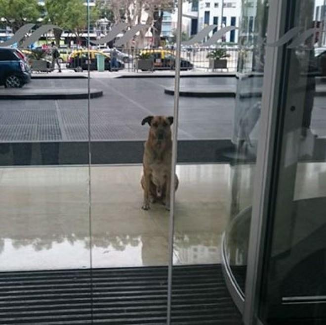 A hűséges eb 6 hónapon keresztül várt az utaskísérő hölgyre egy hotel előtt