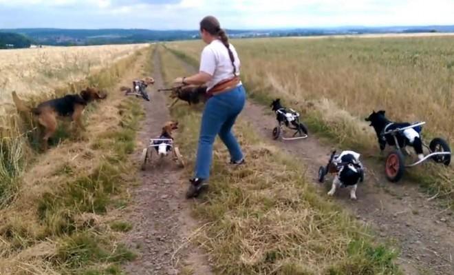 Megható videó kerekesszékes kutyusok önfeledt játékáról