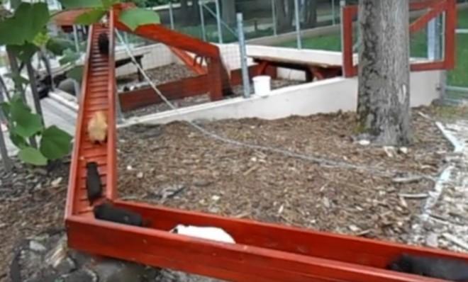 Tengerimalac - vonat a győri állatkertben