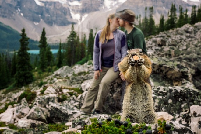 Egy mókus zavarta meg a jegyesfotózást