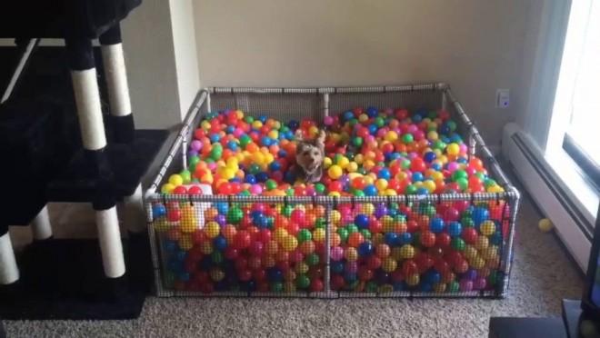 Legjobb ajándék amit csak egy kutyus kaphat