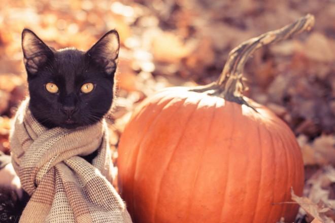 Hangolódj az őszre cuki macskás képekkel!