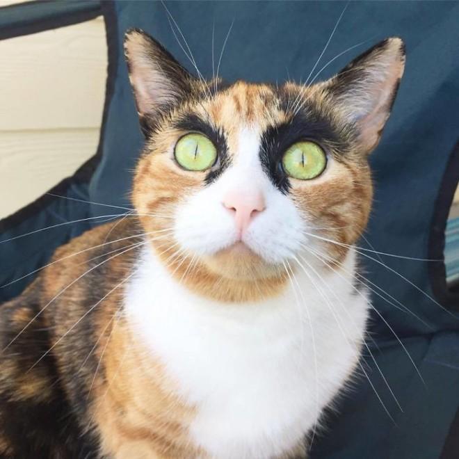 Az internet új kedvence a morcos tekintetű cica