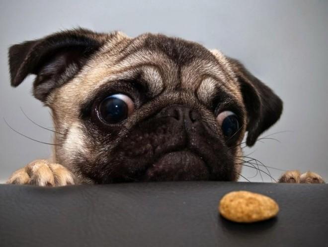 Készíts kedvencednek löncshúsos házi kutyakekszet!