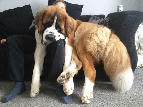 10 kutya, akik nincsenek tisztában a személyes tér fogalmával