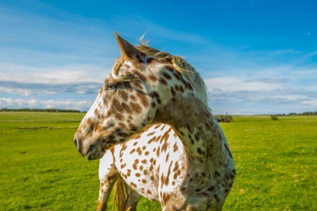 Különleges lófajták amiről nem is tudtad, hogy léteznek