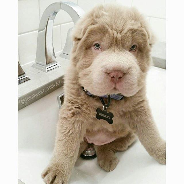 6 kutyus, akik teljesen más állatra hasonlítanak