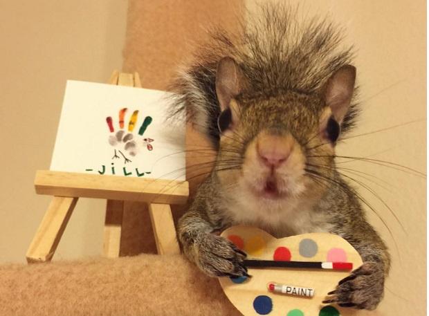 Jill a legcukibb mókus