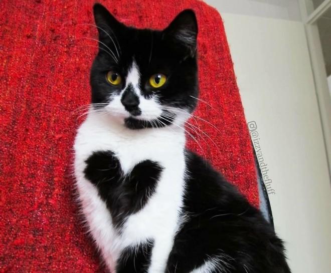 A csupaszív cicába Te is rögtön beleszeretsz!