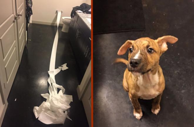 Egy kutyus, aki megpróbálta feltörölni a saját pisijét!