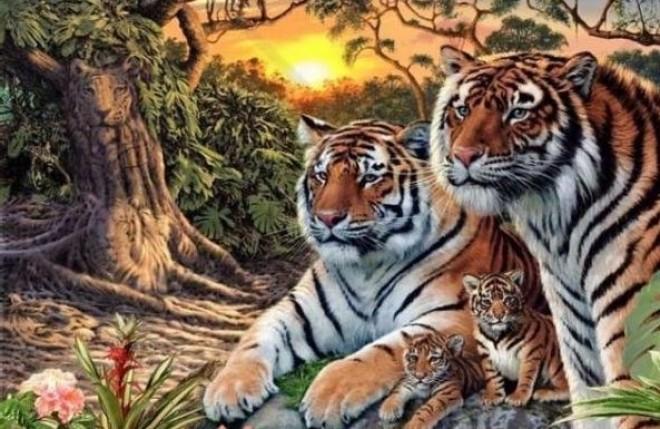Hány tigrist látsz a képen?