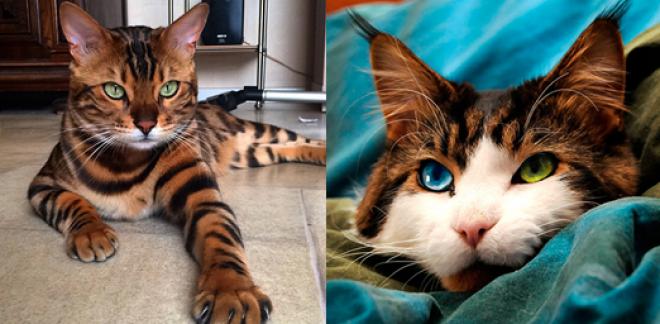 Cicák, akik előző életükben szépségkirálynők voltak!