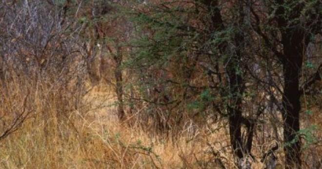 Te látod, hogy milyen állat bújt el a képen?