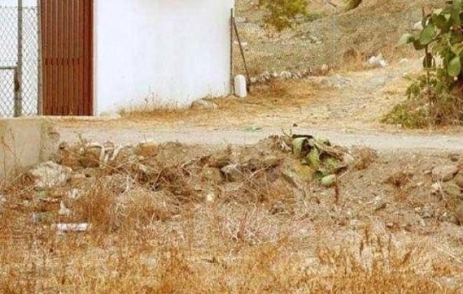 Te mennyi idő alatt találod meg a macskát a képen?