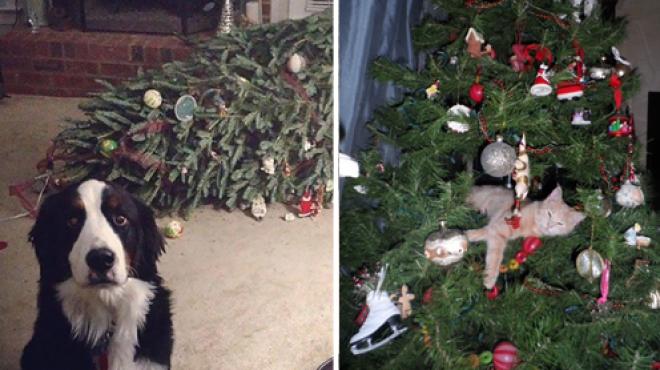 Cuki állatok, akik tönkretették a karácsonyt!