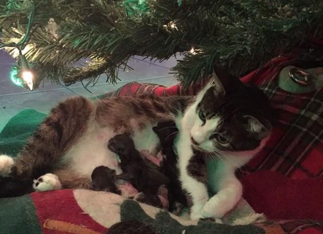 Karácsonyi csoda!