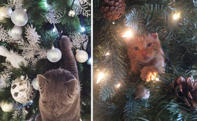 Cicák, akik karácsonyfadísznek képzelik magukat!