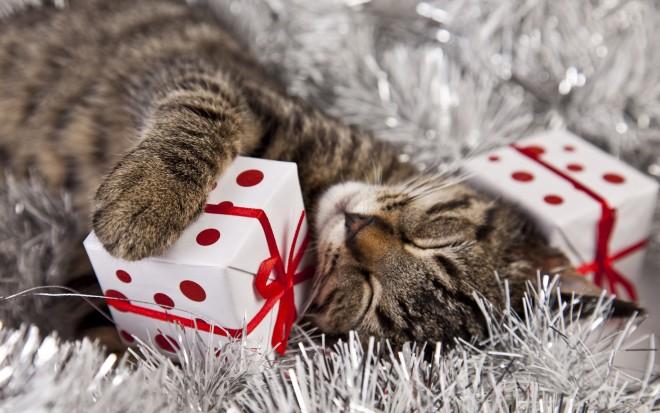 Nézd meg, hogyan bontják ki a karácsonyi ajándékukat ezek a cicák!