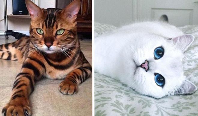 Ilyet még nem láttál! - Egy cica aki úgy néz ki mint egy mesefigura!