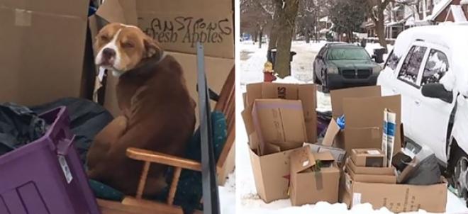 Költözéskor a szeméttel együtt kutyájukat is kidobta egy család!