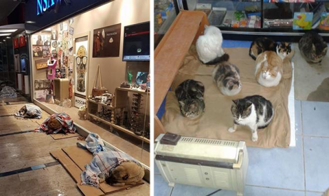 ELKÉPESZTŐ! Kóbor állatoknak nyitották ki az üzleteket, hogy ne fagyjanak meg!