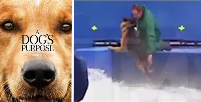 ELKÉPESZTŐ! Egy kutya négy élete című film premierjét lefújták állatkínzás miatt!