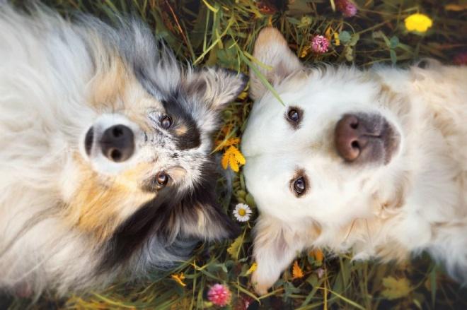Legédesebb kutyabarátságok
