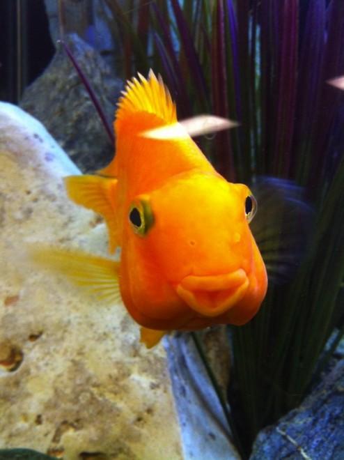 A halak márpedig viccesek