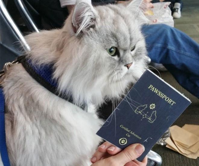 Egy macska, akinek több kalandban volt rész mint bárkinek