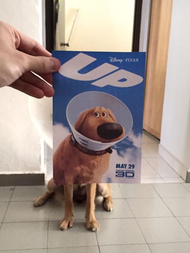 Filmplakát és kutya találkozása