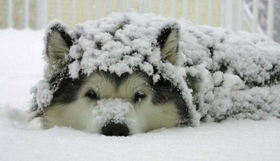 Farkasordító hideg az ország egyik felében