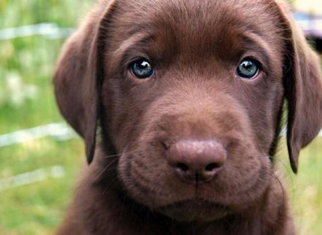6 dolog, amit a kutyád lát, de Te nem!