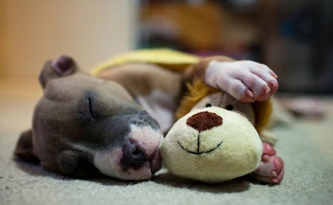 Milyen pózban alszik a kutyád? Ezt árulja el a személyiségéről!