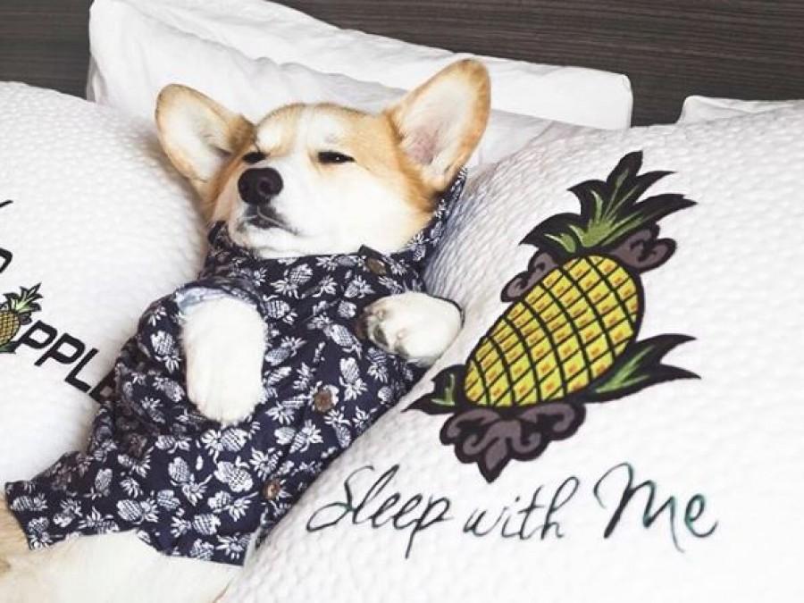 Már a kutyák közt is vannak influenszerek