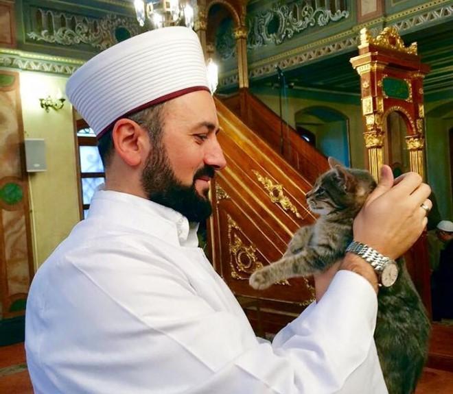 Mustafa Efe Megnyitja Mecset ajtóit a kóbor macskák előtt