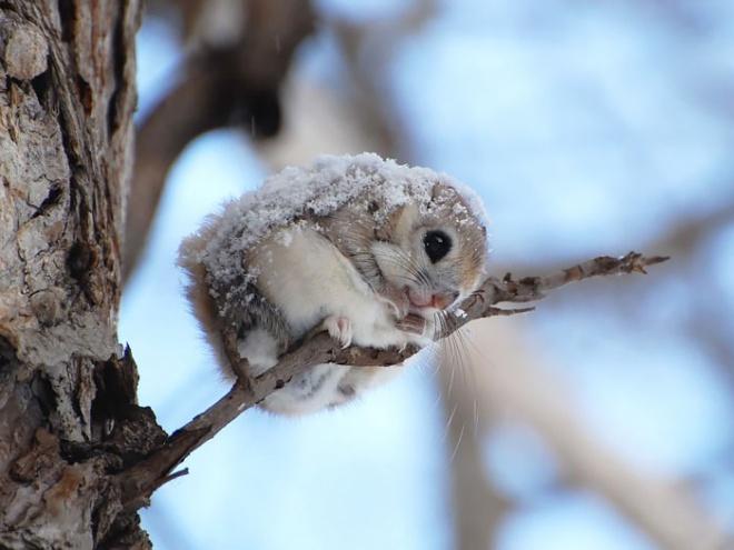30 imádnivaló mókusos fotó
