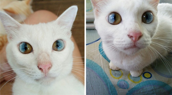 Az univerzum szemű cica