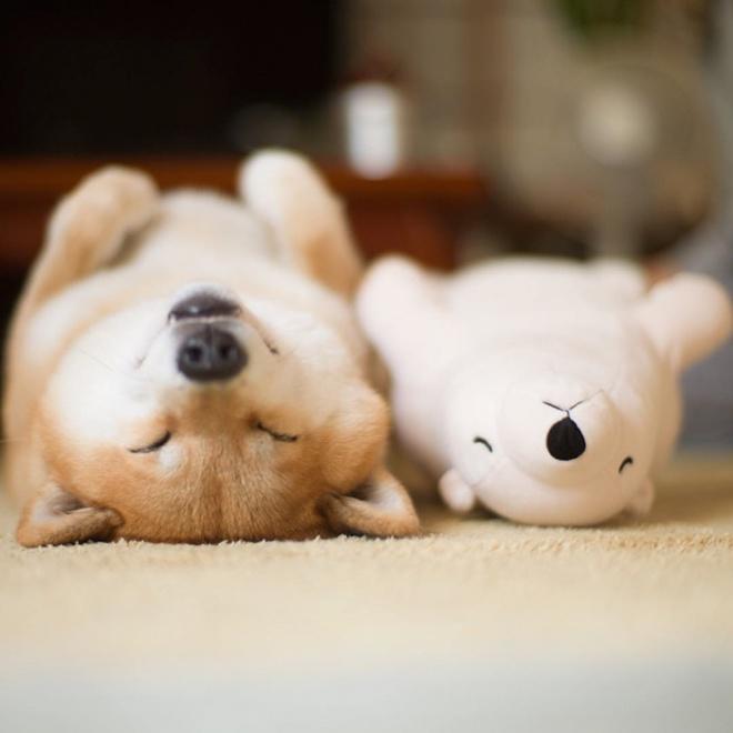Egy kutyus, aki imád abban a pózban aludni mint kedvenc plüss játéka