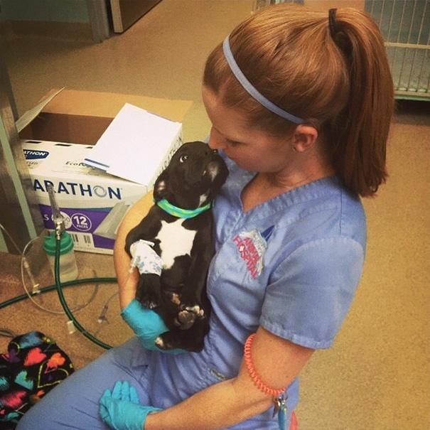 Bizonyítékok, hogy az állatorvosi szakma az egyik legszebb a világon
