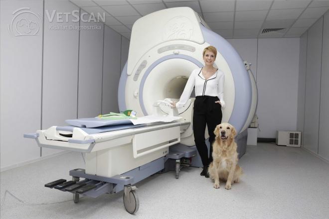 Mérföldkő az állatgyógászatban: működik az első, kizárólag állatorvosi vizsgálatokat végző, nagy térerejű MR-berendezés