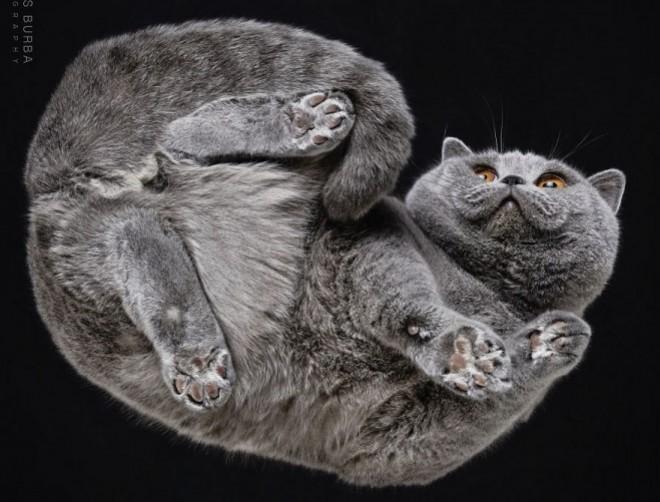 Macskák üveglapon